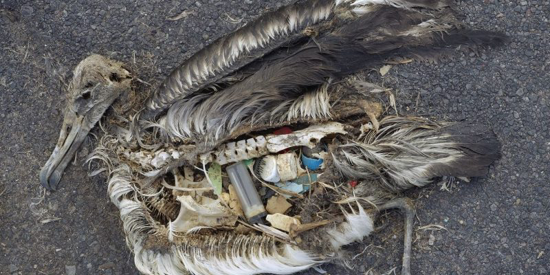 Stomach contents of an albatross chick photographed in the Pacific in 2009. Image- By Chris Jordan (via US Fish & Wildlife Service HQ)