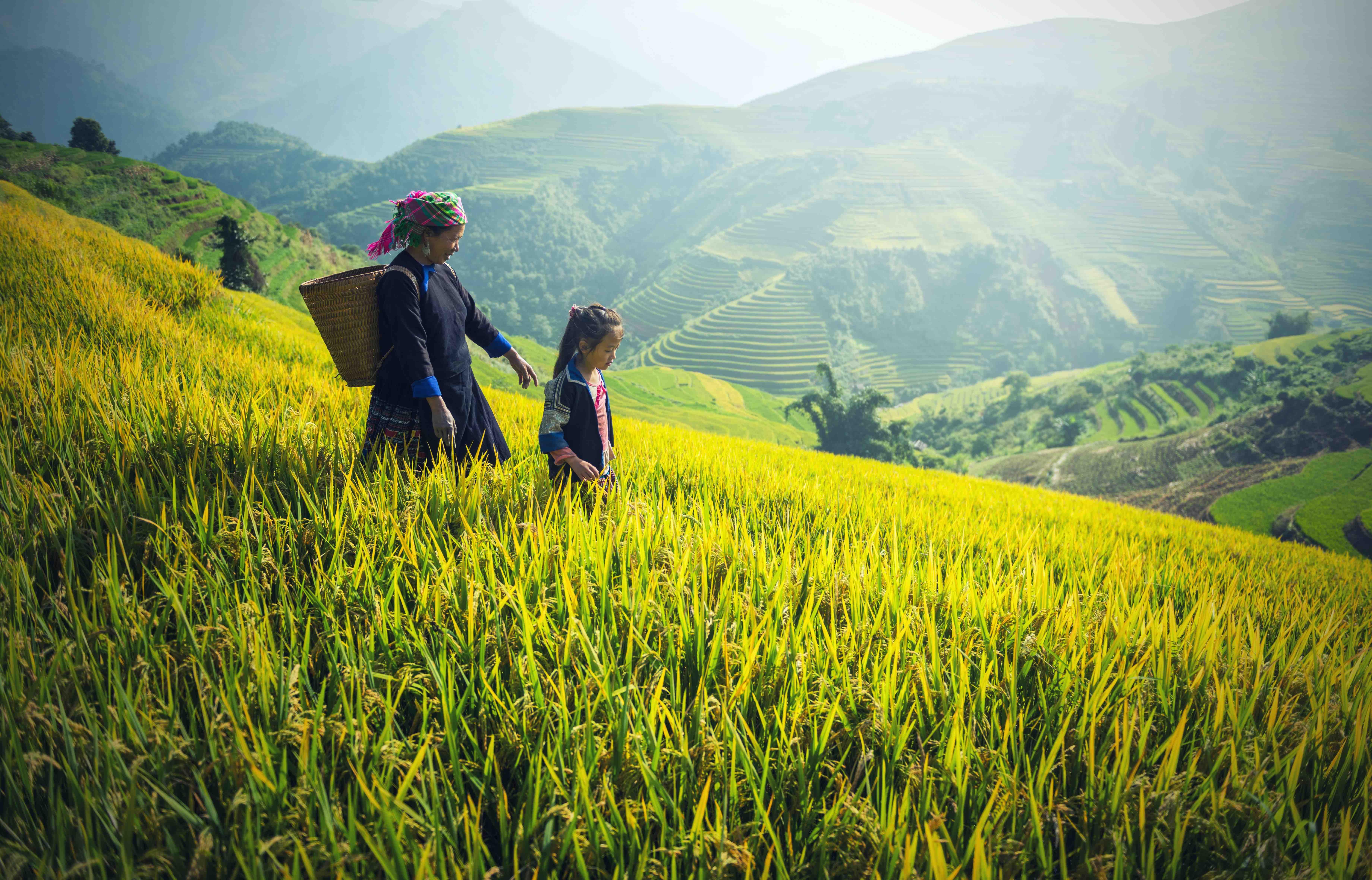 Tea female farmer 4 web