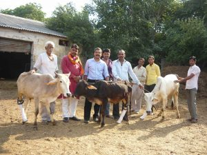 3 cows and owners for web